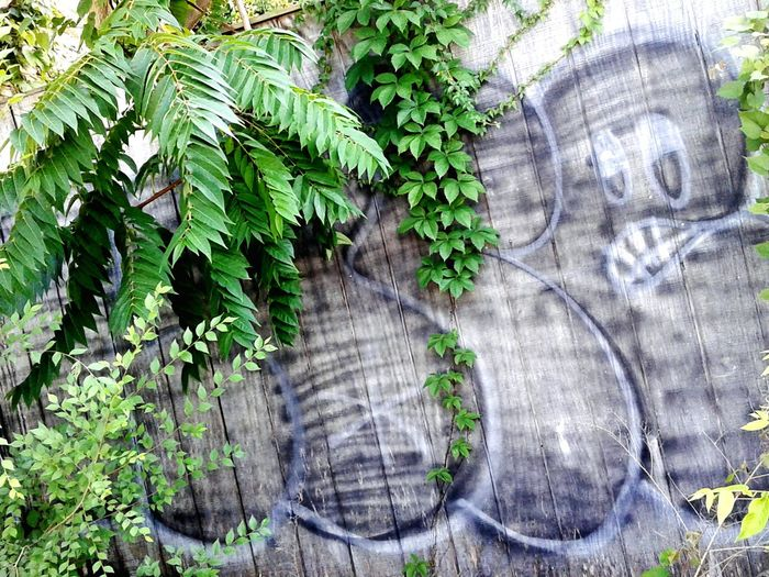 Tree Growth Day Plant Outdoors No People Architecture Close-up Nature Graffiti Graffiti Art Let's Go. Together. EyeEmNewHere First Eyeem Photo Road Side View Beauty In Nature Road Side Scenery Tree Area Green Color Wood - Material Roadside Art And Craft Communication Spray Paint Street Art