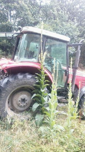 Bretagne France Tracteur Farm Life Flowers Fleurs Fleur Geante