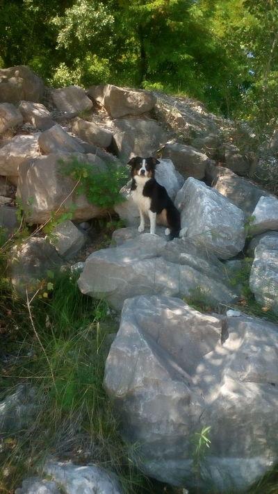 What a poser EnjaTheNinja Mydog Bordercollie  Walk River Meduna