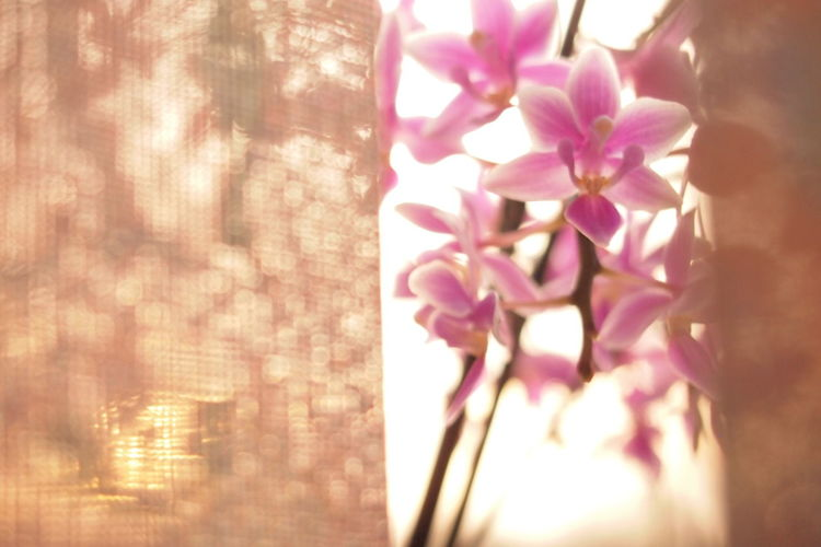 Asian  Blooming