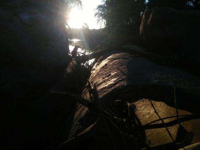 Lake Tree Shadow