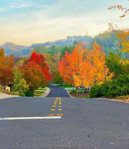 """From Asphalt To Autumn"" An asphalt street in a suburban neighborhood leads down and into some spectacular Autumn color. Suburban Exploration Fall Autumn Autumn colors Fall Colors Asphalt Road Asphalt Tree Autumn Road Sign The Way Forward Change Beauty In Nature"