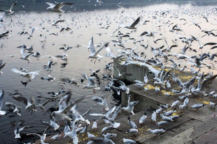 Flock of birds in the water