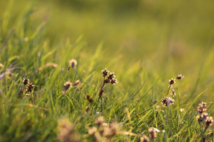 Enough warmth to still sit in the grass. EyeEm Selects Plant Growth Beauty In Nature Nature Field Flower Land Green Color Flowering Plant Selective Focus No People Grass Day Tranquility Freshness Fragility Outdoors Close-up Sunlight Focus On Foreground