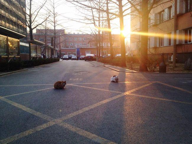 They are good friends😺💓😸 Cat♡ Friends Hello World EyeEm Best Shots