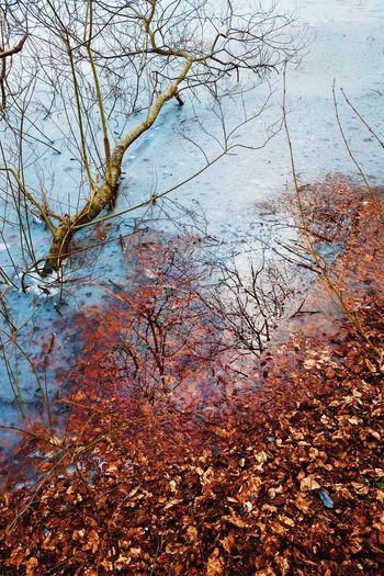 Full frame shot of wet tree branches against sky