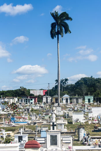 Death and live: graveyard and a tall Royal Palm in a beautiful blue clear sky Architecture Building Exterior Built Structure Cemetery Cloud - Sky Concept Day Death Landscape Nature No People Outdoor Photography Outdoors Palm Tree Royal Palace Royal Palm Sky Tree