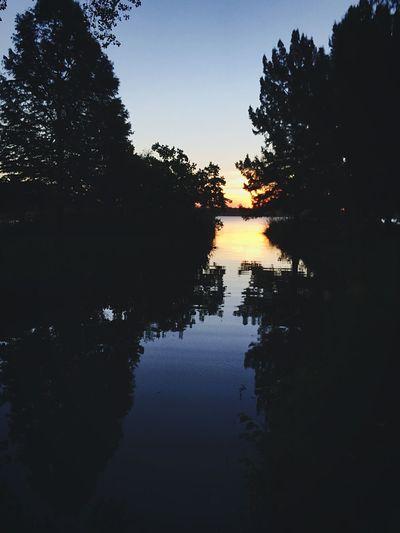 White Rock Lake Sunrise TreePorn Silhouette Saturday In The Park