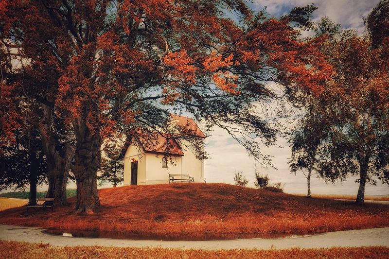 Tree Autumn Change Nature Beauty In Nature Tranquility Tranquil Scene No People Landscape Vienna Alps Austria A Photo Like A Painting Melancholic Landscapes Capture The Moment Countryside Old Tree Church Resting Place