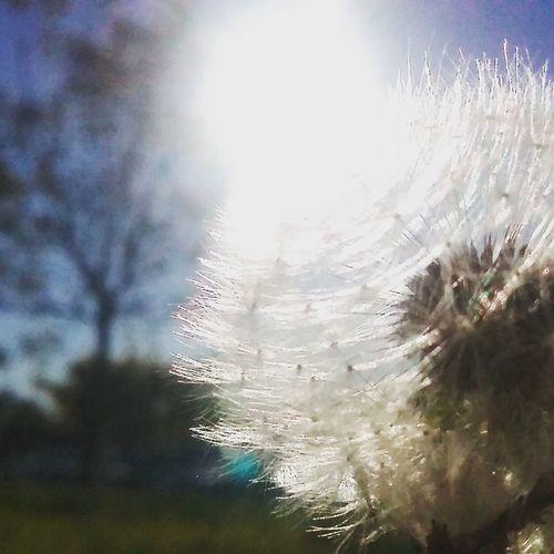 Day Sunlight