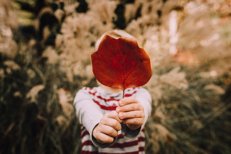 Autumn Beauty In Nature Boy Child Childhood Close-up Day Focus On Foreground Holding Human Body Part Human Hand Nature One Person Outdoors People Plant Real People