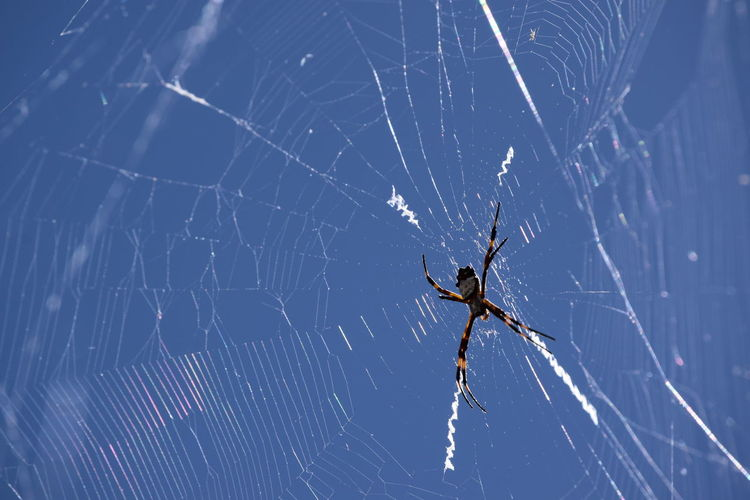 Close-up of spider and web against sky
