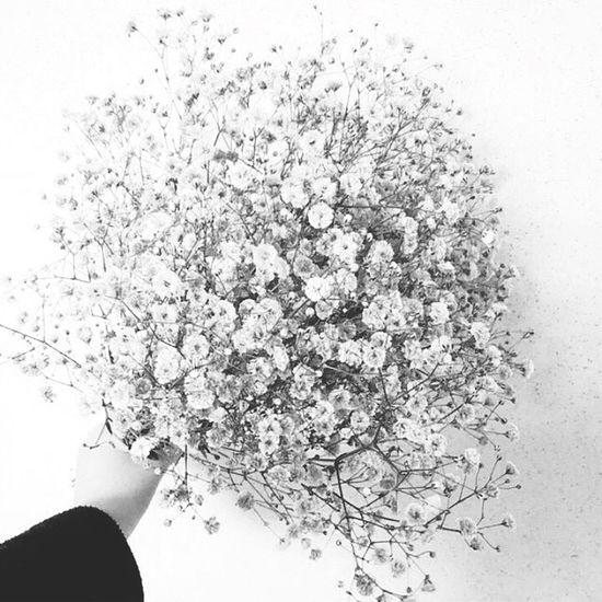 Babysbreath Flowers