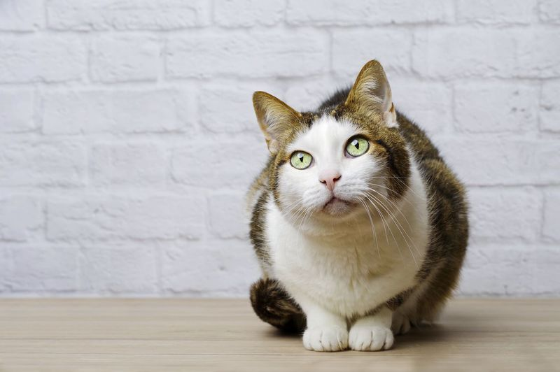 Close-up of cat looking away while sitting on table against wall