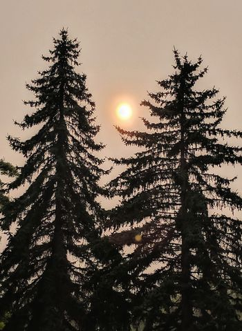 Tree Sunset Tree Area Outdoors Sky No People Beauty In Nature Montana Forest Wildfires Wildfire Smoky Sunset Sunlight Sunset_collection Surreal Nature Sun Nature_collection Landscape Enjoying Life Taking Photos