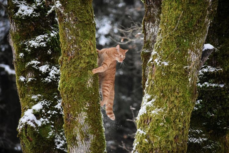 Low Section Of Cat On Tree Trunk