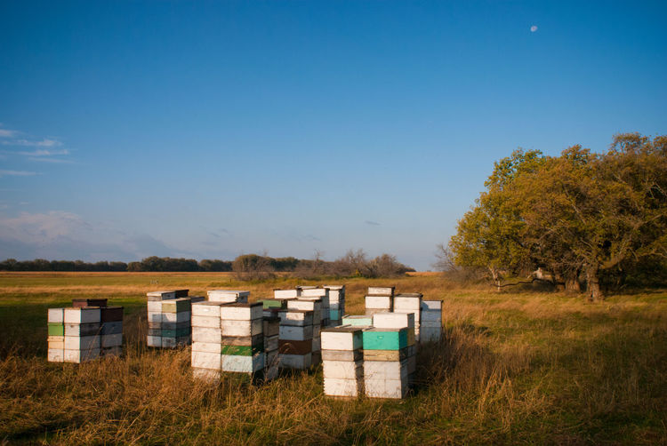 Beehive APIculture Bee Landscape Grass Sky Land Animal Themes Apiary Honey HoneyBee Agriculture South Dakota Farm Rural Scene Countryside Field Environment No People Tranquility Clear Sky Tree Outdoors
