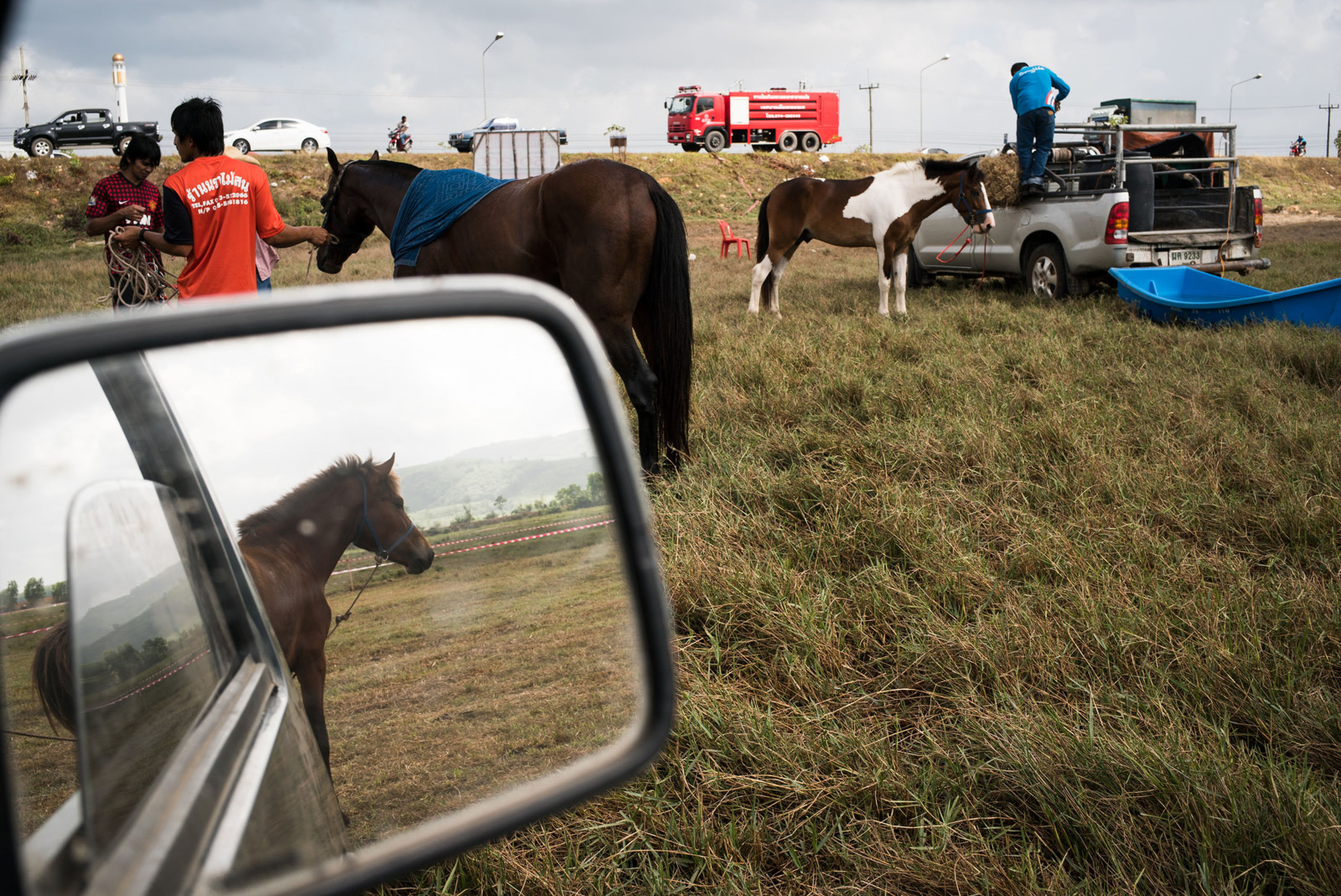 land vehicle, mode of transport, transportation, domestic animals, field, grass, car, day, outdoors, livestock, safety, street, mammal, sky, protection, animal themes, horse, stationary, incidental people, men