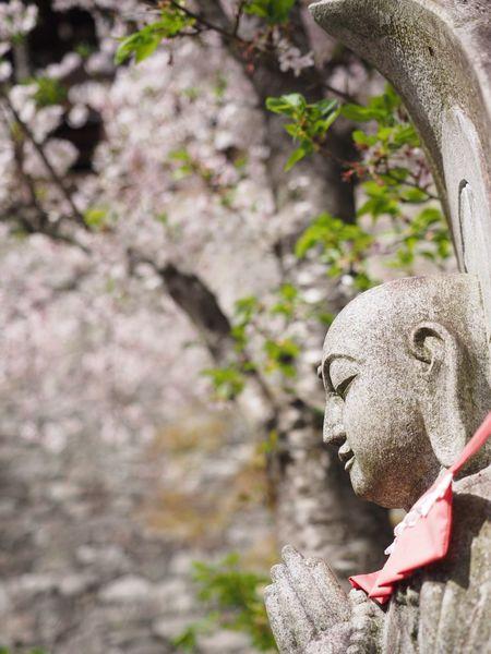 清水寺 桜 地蔵