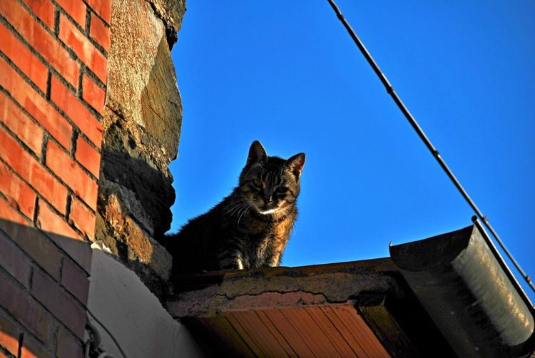 Montalcino. Animal Themes Architecture Blue Building Exterior Built Structure Clear Sky Day Domestic Animals Domestic Cat Feline Low Angle View Mammal No People One Animal Outdoors Pets Sky