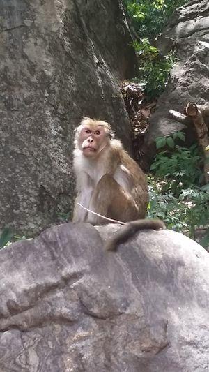 Monkey One Animal Outdoors