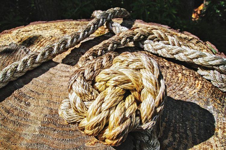 Close-up of rope on tree stump