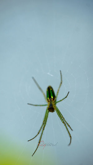 Animals In The Wild Arachnid Close-up Full Length Insect Outdoors Spider Spider Web Spiderweb