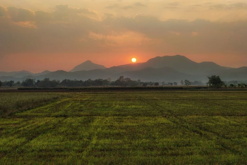 sunset Irrigation Equipment Rice Paddy Tree Mountain Tea Crop Sunset Rural Scene Agriculture Fog Beauty Rice - Food Staple Valley Rice - Cereal Plant