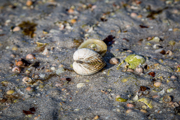 High angle view of snail on land