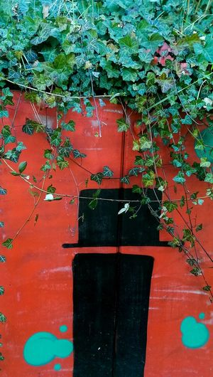 Enchanted Adapted To The City Red Day No People Outdoors Nature Green Ivy Door Aliceinwonderland Passage Contrast Frankfurt Frankfurt Am Main Urban Landscape Urban City Graffiti Graffiti Art Wall Wall Art Art Is Everywhere