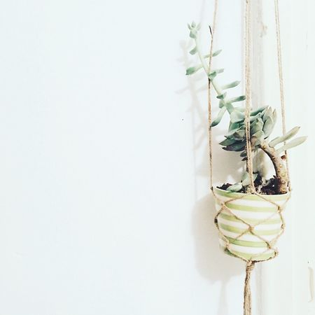 Succulents Succulent Plant Succulent Copy Space White Background Plant No People Studio Shot Nature Growth Close-up Leaf Fragility Flower Freshness Indoors  Beauty In Nature Green Home Made Home Decor Minimalism Home Interior Green Color Cactus Decoration Art Is Everywhere