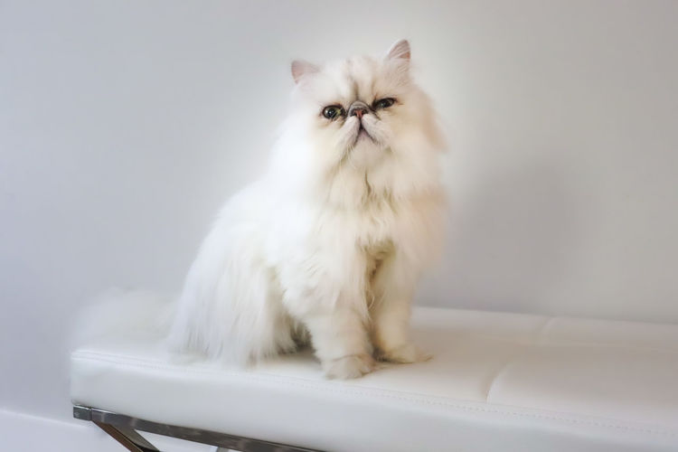 Portrait of white cat sitting on floor