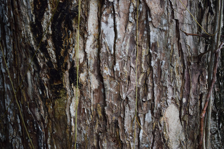 Backgrounds Close-up Day Full Frame Nature No People Outdoors Rough Textured  Tree Tree Trunk