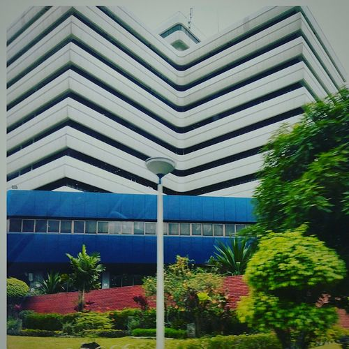 WheninQC Office Building Architecture Built Structure Building Exterior Low Angle View Tree Day Plant Blue Outdoors Sky Greenhouse No People Green Color Architecture Window Nature Growth Flower Nature Bureau Of Internal Revenue Philippines Bir National Office