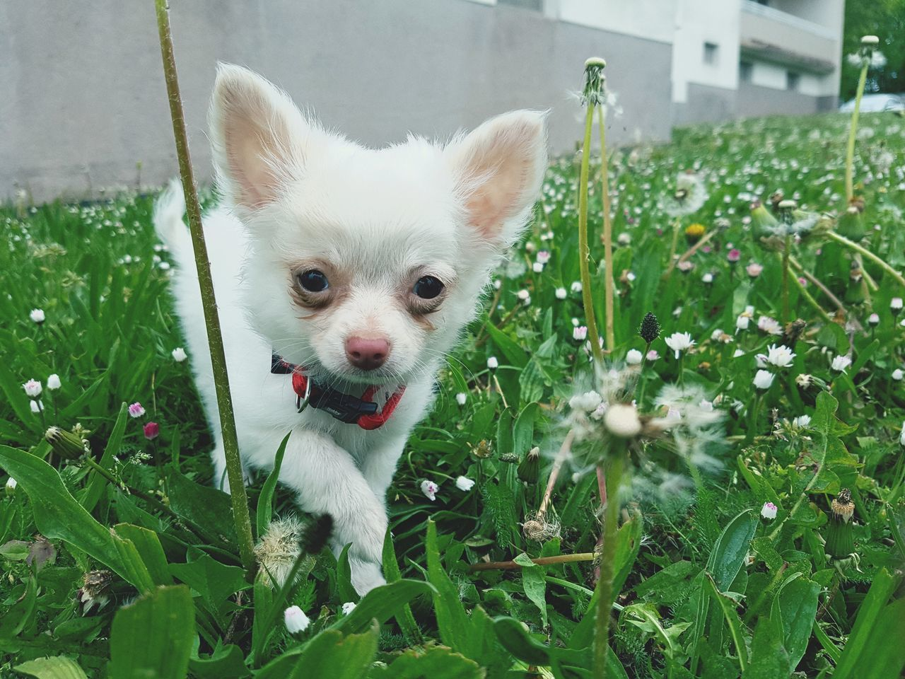 pets, one animal, domestic animals, animal themes, dog, mammal, grass, growth, outdoors, green color, plant, no people, day, flower, close-up, nature