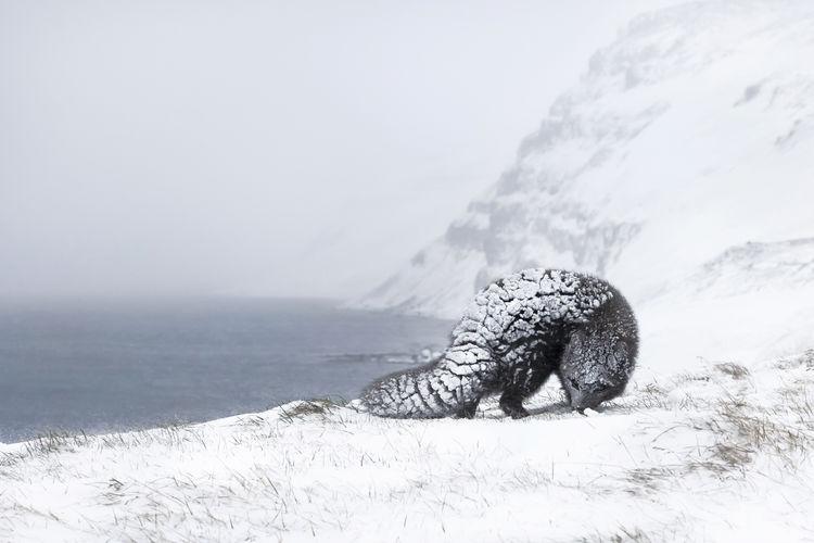 Arctic fox by sea on snow