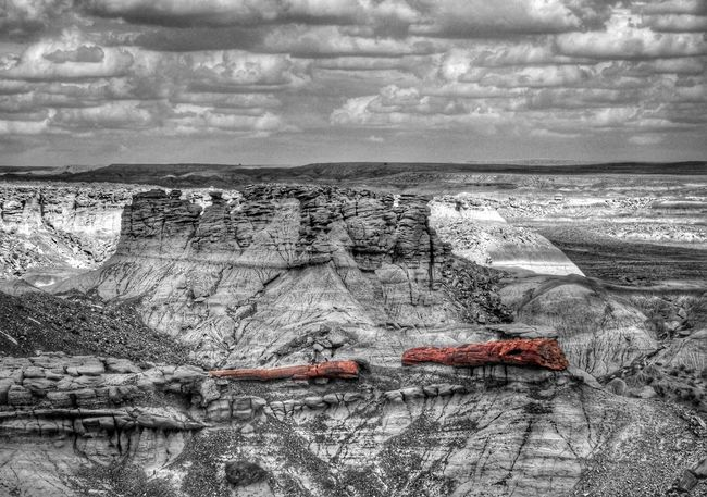 A Happy Petrified Treegasmic Tuesday to one and all ... Colorsplash EyeEm Best Shots EyeEm Best Edits EyeEm Nature Lover Hdr_Collection Petrified Forest National Park