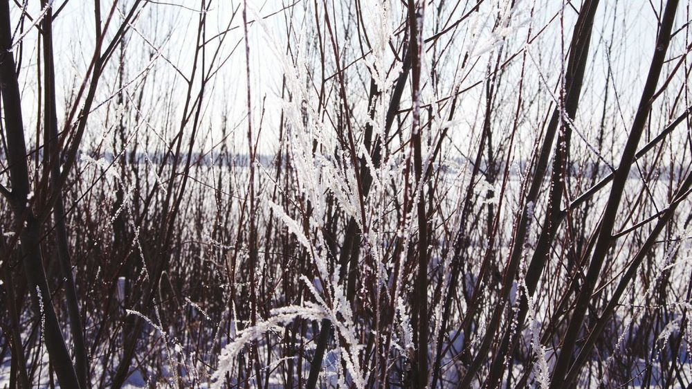 Retro Styled Snow ❄ Winter Wintertime Winter Trees Winter_collection Nature Nature Photography Nature_collection Tree_collection  Frozen Branches Bushes Frozen Nature Frozen Grass зима White Frost Branches And Snow Tree Snow Cold Temperature Winter Backgrounds Full Frame Sky Close-up Branch Dead Plant Tree Trunk Frozen Snow Covered Snowcapped