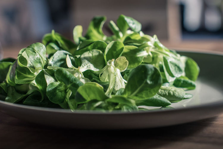 Basil Close-up Day Food Food And Drink Freshness Green Color Healthy Eating Indoors  Leaf No People Vegetable