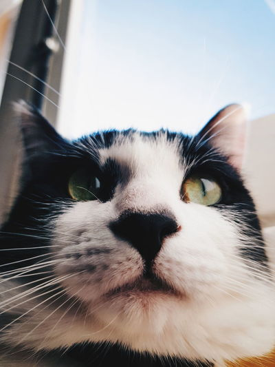 Artur Phonecamera PhonePhotography SamsungGalaxyS8 Light And Shadow Animals Sun Light Home Cutepet Perspective Lines Aveiro Sunny Day View Pet Pets Portrait Domestic Cat Looking At Camera Feline Close-up Sky Cat HEAD Animal Eye Nose Kitten Animal Face At Home Animal Nose Eye