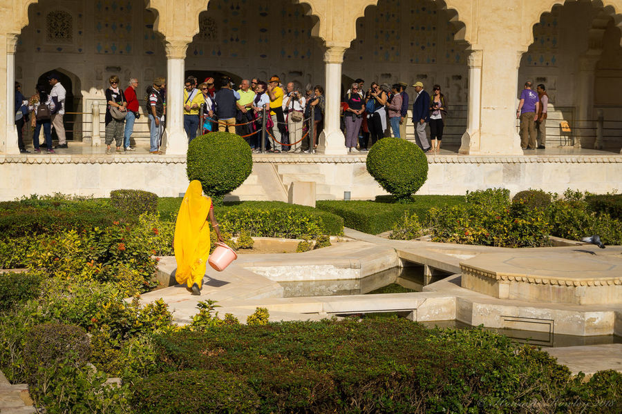 Lady in yellow tends to the geometric garden in the Amber (Amer) Fort, Amer, Jaipur, India India Jaipur Jaipur Rajasthan Amber Fort Amer Fort Amer Fort Garden Architectural Column Architecture Building Exterior Built Structure Day Fort Garden Geometric Garden Large Group Of People Lifestyles People Rajasthan Real People Women Yellow