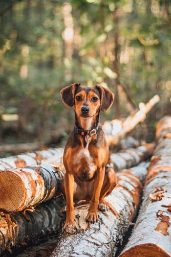 Portrait of dog sitting on wood