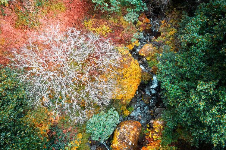 Colors Drone