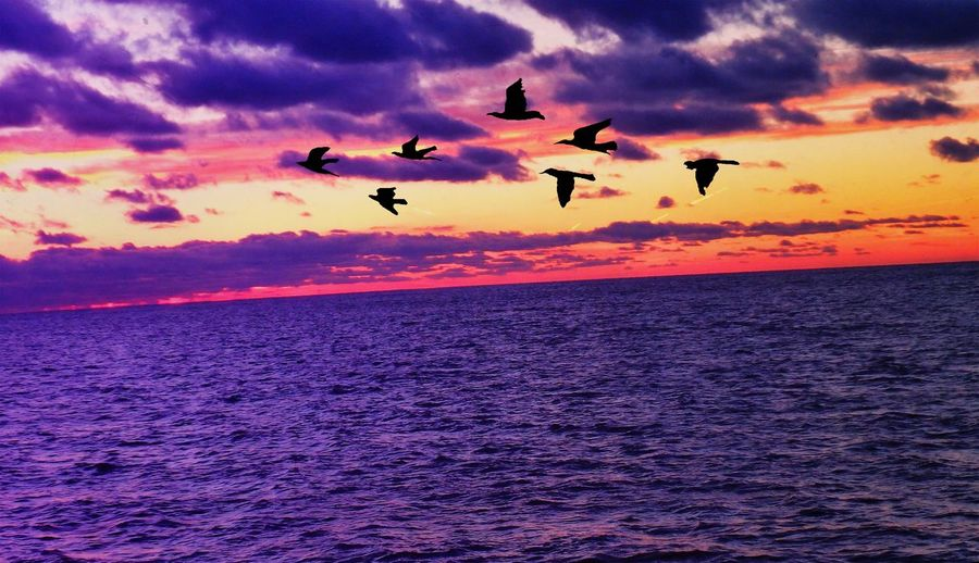 Have a lovely evening everyone, oh & I added the birds w/ an app! I couldn't resist!! .. Goodnight Sunset Scenics Cloud - Sky LakeErie Water Horizon Over Water EyeEm Gallery Photography EyeEm Best Edits November Inspired Tranquility Dramatic Sky