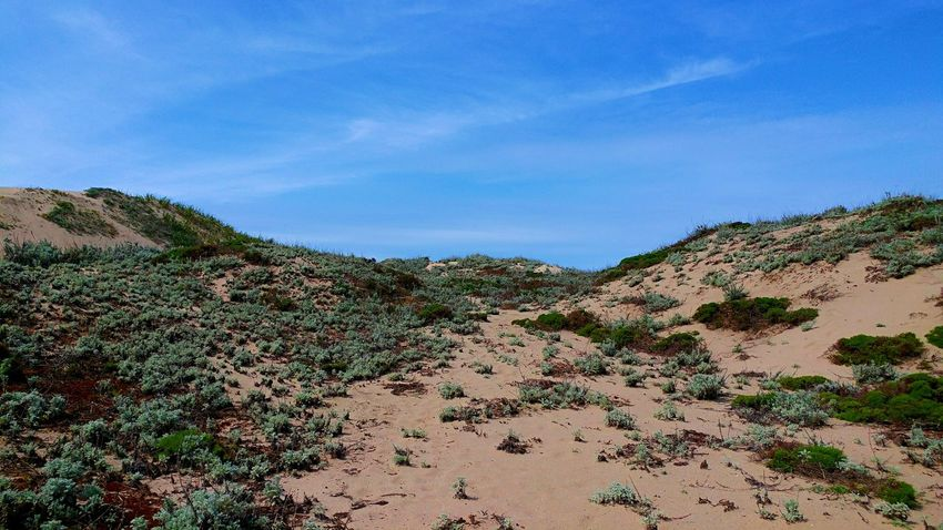Two sand dunes are covered in mossy plants along the California Coast. Beach Landscape Blue Horizon Over Sand Dunes California Coast Landscape Moss Landing, CA No People Plant Covered Sand Dunes Sand Dunes With Scrubb Scrublands Tranquil Scene