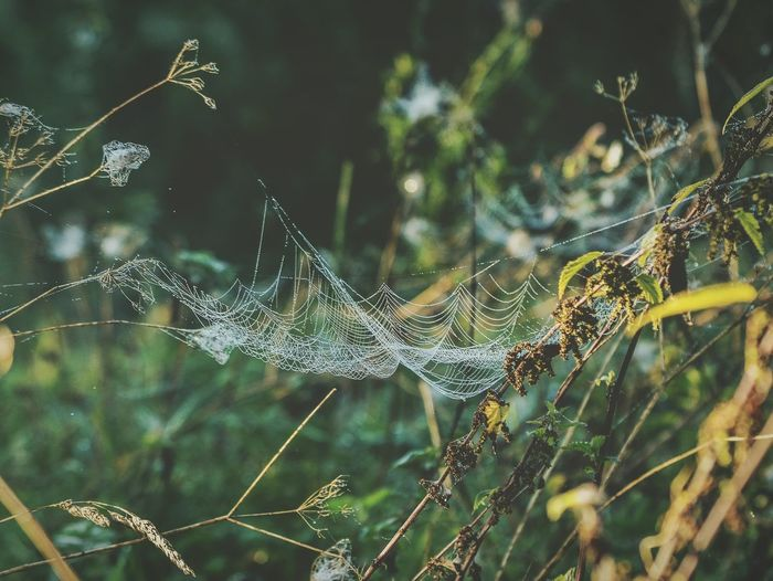Spider Web Nature No People Day Outdoors Beauty In Nature Mothernature Spiderwebs Web Nature Photography Nature_perfection Nature Beauty Poland Warmia Olsztyn