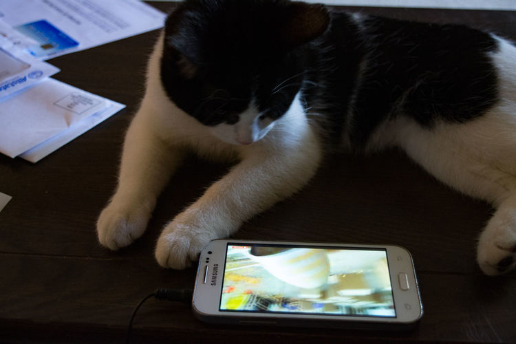 Black and white cat watching video on a smart phone. Communication Connection Day Domestic Cat Indoors  Mammal No People One Animal Pets Portable Information Device Technology Wireless Technology