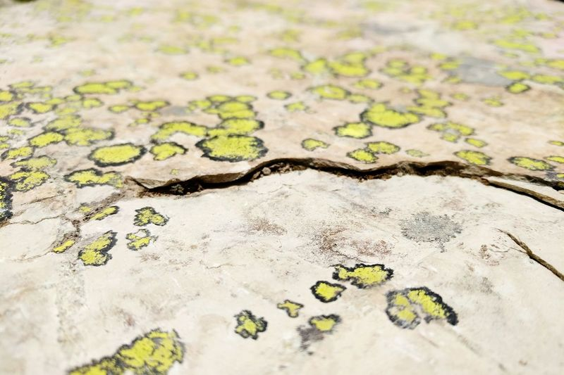 Background Texture Rock Harsh Climate Resilient Nature Close-up Moss Lichen Growing