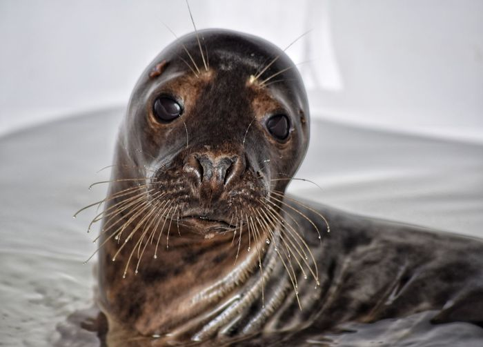 Close-up of young seal