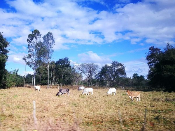 Ara Pyahu San Pedro Paraguay ♥ Nature Beauty In Nature Blue Sky And Clouds Paradise ❤ Paradise On Earth Peaceful Place Tranquility Nature Rural Scene Day Outdoors Tree